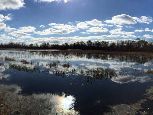 Nickel-marsh.jpg