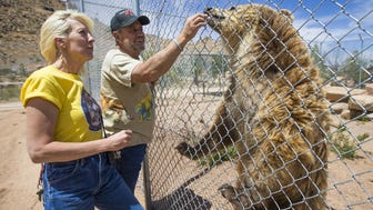Keepers of the Wild founder Jonathan Kraft and co-director Tina Matejek give a treat to Bam Bam, a grizzly bear.