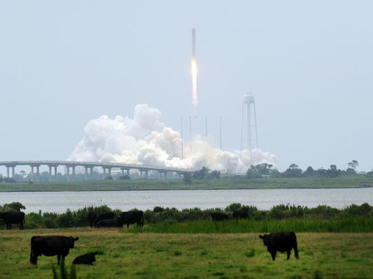 Orbital's Antares rocket carrying the Cygnus Spacecraft lifts off from the Mid-Atlantic Regional spaceport at Wallops Flight Facility on Sunday, July 13, 2014 while a herd of cattle graze in a pasture nearby in Atlantic, Va. Cygnus is expected to reach the International Space Station with supplies on July 16.
