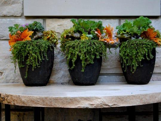 mooris fall 3 small pots (1)