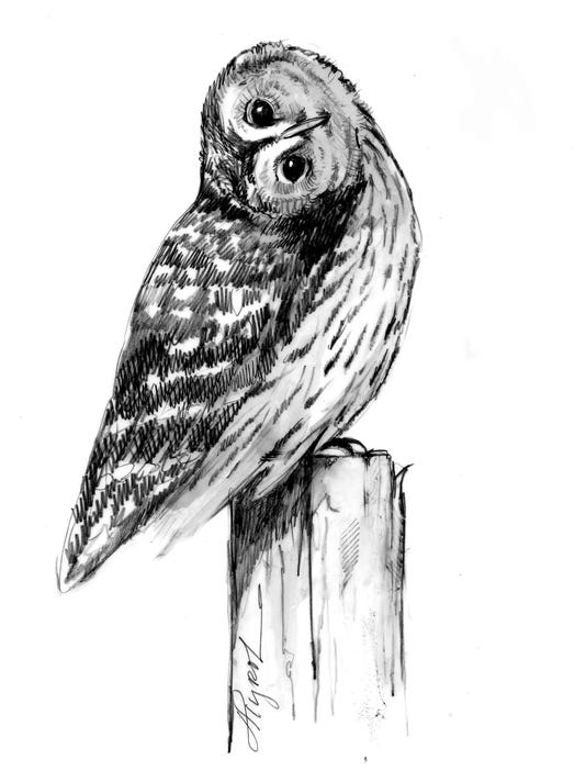 TOS_barred_owl.jpg