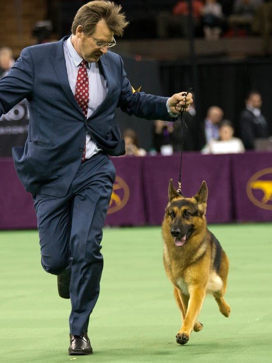Annual National Dog Show Herding Dogs