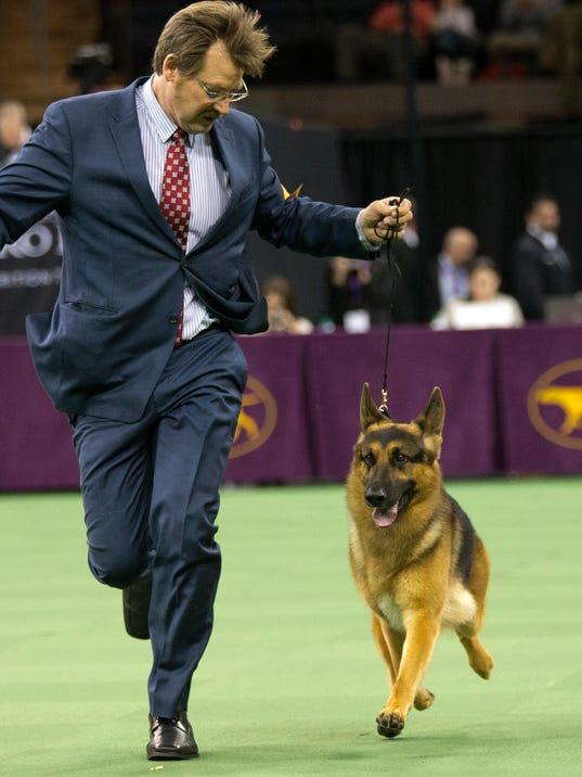 Westminster Dog Show Rumor