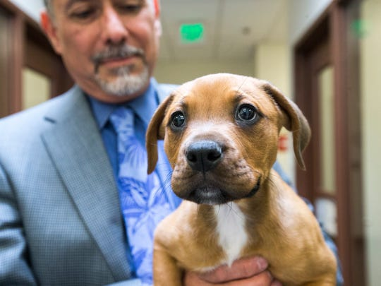 Silva said budget constraints have left the shelter operating with only half of the needed veterinarians and technicians. The county's surgical complication rate is 0.05 percent, one of the lowest of any public or private shelter, he said.