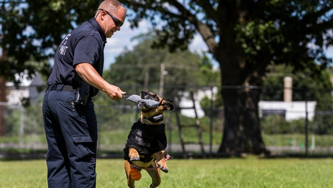 K-9 Greta nabs a tug toy from her partner Master Cpl. Jake Dolinger at the Wilmington Police Department K-9 training course in Wilmington on Monday afternoon.