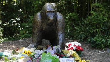 Flowers and other items were left Monday at the Gorilla World exhibit for Harambe, the gorilla shot and killed Saturday after a 4-year-old boy fell into a shallow moat surrounding the Cincinnati Zoo's gorilla exhibit.