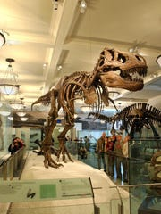 The T-Rex at the American Museum of Natural History is a must-see.