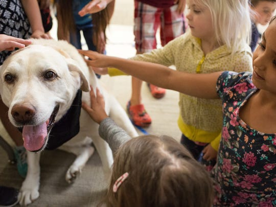 Millie the therapy dog gets petted on her last day