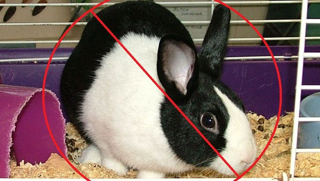 Bunnies are just one of many pets now banned in Suntree.