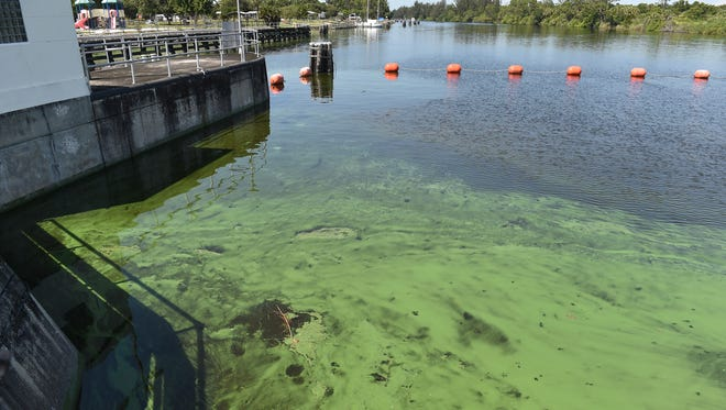 A blue-green algae bloom builds up Friday, July 13, on the upstream side of the St. Lucie Lock & Dam, where U.S. Rep. Brian Mast, R-Palm City, will announce algae-fighting legislation Wednesday, Aug. 1.