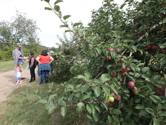 People stroll the paths between fruit trees, at Harvest