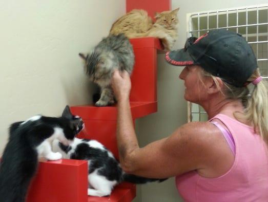 wickenburg animal shelter gets 2 500 from purina