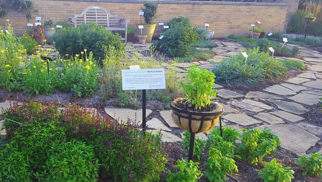 Visit Minnetrista's Culinary Herb Garden to summer to harvest fresh herbs for your cooking needs.