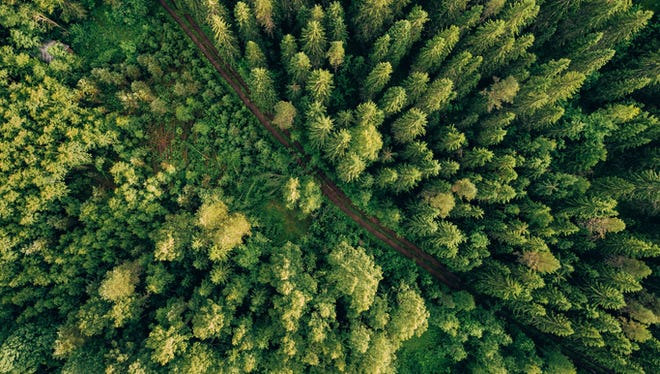 Aerial top view of summer green trees.