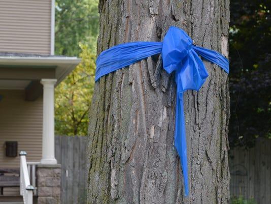 Tree Ribbon.JPG