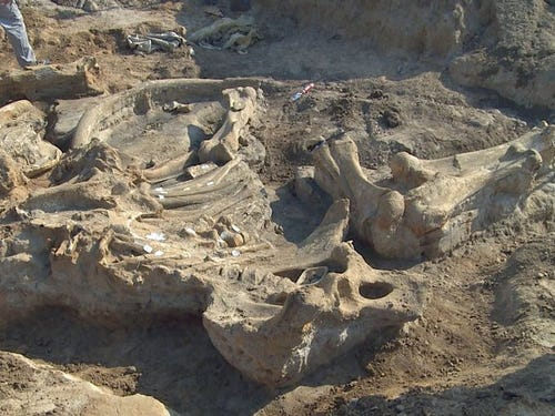 Prehistoric mammoth unearthed in Texas