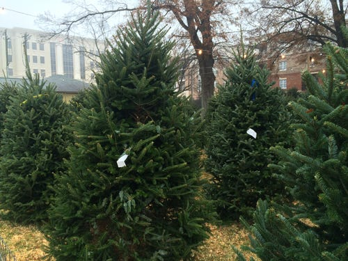 How Much Do Real Christmas Trees Cost.Real Or Fake The Cost Of Christmas Trees In Charlotte