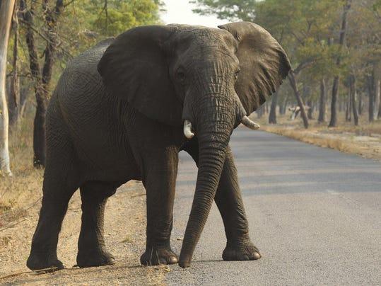 Elephant Hunter Indictment