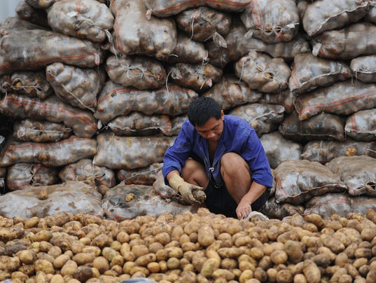 A Chinese worker selects potatoes at a m