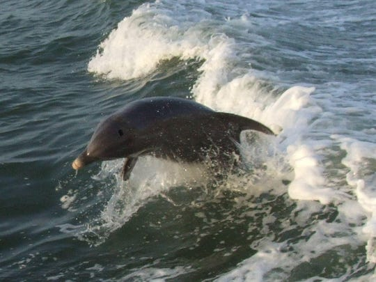 A dolphin tour and sunset cruise are available on the Fort Myers Princess at Fort Myers Beach.