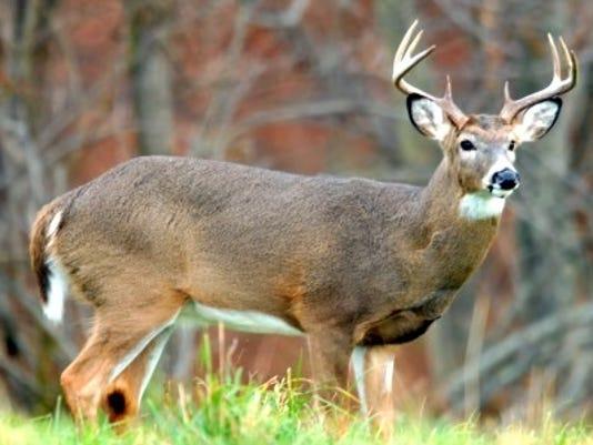 deer-2a.jpg