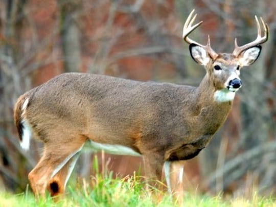 The board of Pennsylvania Game Commission has created a new job -- overseeing the fight against chronic wasting disease.