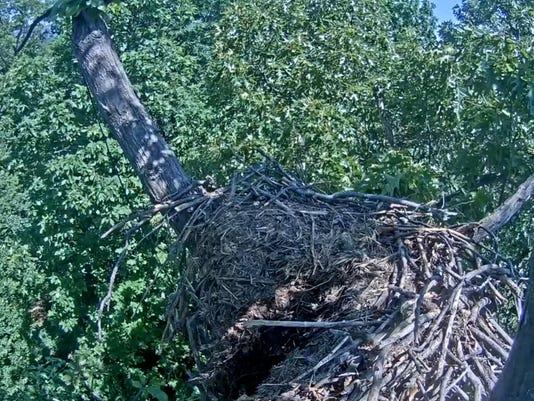 636002909444904407-nest-collapse.jpg
