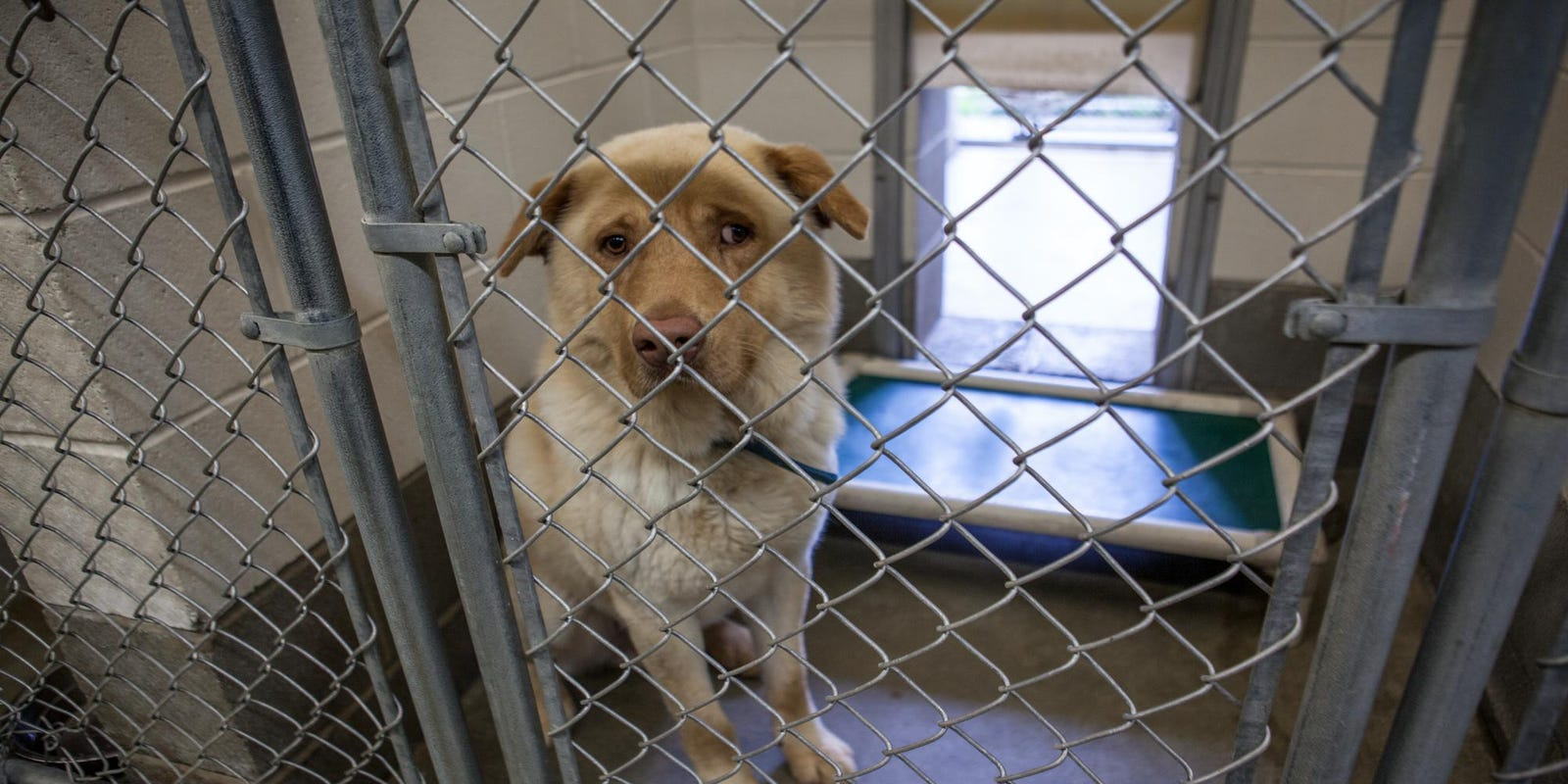 Chester SPCA to take over Wilmington animal control