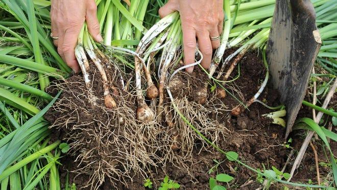 Register for the Wakulla County Extension Master Gardener class beginning on Jan. 17.