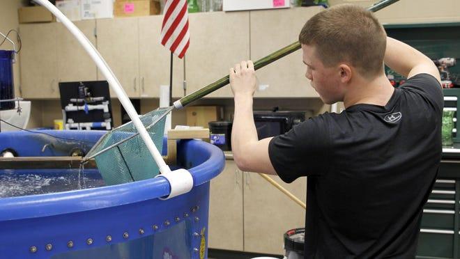 Junior Luke Boord retrieves a fish from the aquaponics tank.