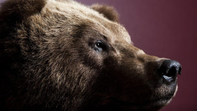 A grizzly bear by Katie Rogers, president of the Montana Taxidermists Association, stands on display Thursday, April 13. The MTA convention and competition will be held at the Best Western Heritage Inn April 27-30.