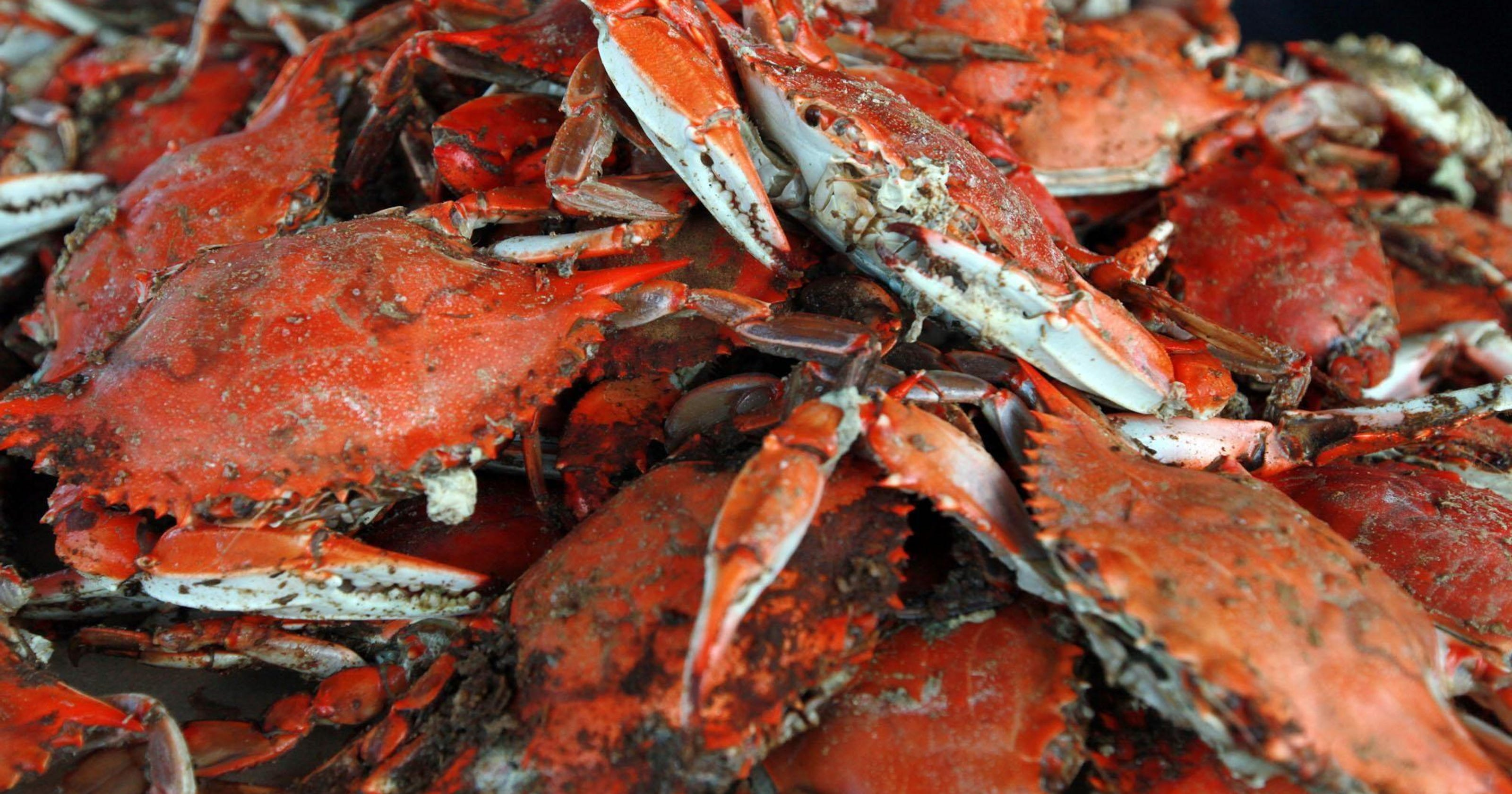 Best Crab Restaurants In Maryland Make Your Voice Heard For