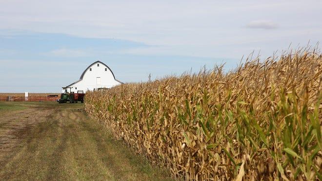 Corn extends like a wall at Geisler Farms in rural Bondurant.