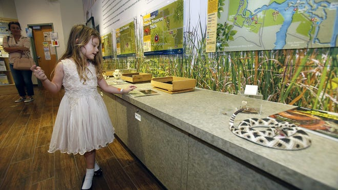 Four-year-old Aria Cox checks out the displays at Lyonia Center in Deltona. The center is open during the coronavirus pandemic and plans outdoor educational events about native ecosystems through August.