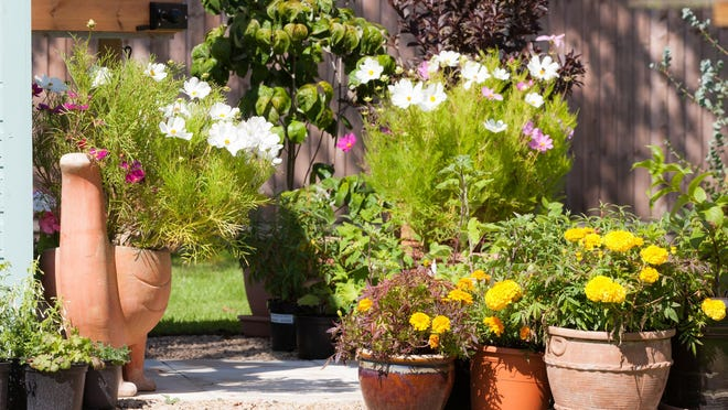 Don't be afraid to cut, mix and match plants. Just a few improvements will freshen up your container and make it last into fall.