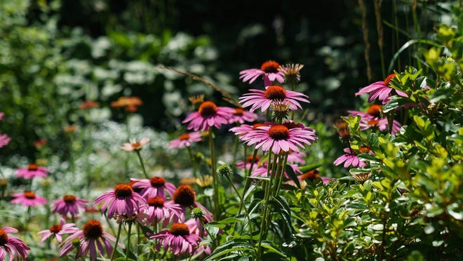 The garden is carefully planned so every season has a show of flowers.