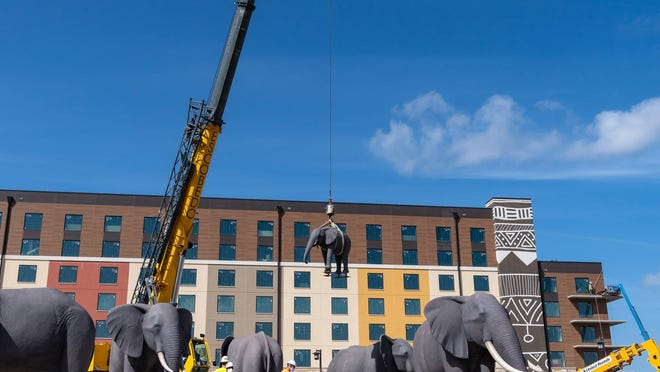 A baby elephant sculpture is lifted into place on July 18 as 22 life-size animal sculptures were installed at the entrance to Kalahari Resorts Round Rock. The reinforced metal and concrete animal sculptures, including 12 elephants, seven zebras, a mother and baby rhinoceros and a cape buffalo, traveled on four flatbed trailers from Eureka Springs, Ark., to Round Rock.