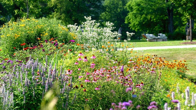 A mix of colorful wildflowers creates a beautiful border.