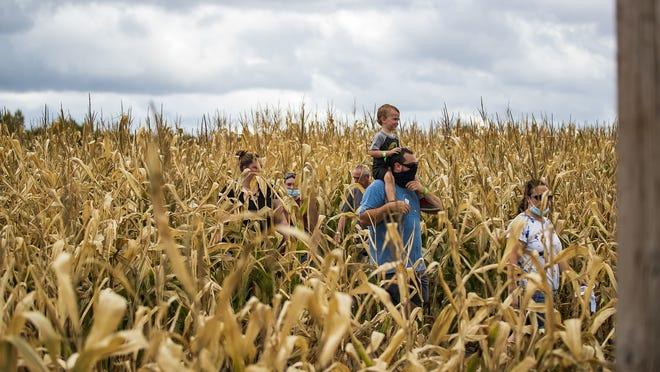 Families explore the Sauchuk's Corn Maze in Plympton on Sunday, Sept. 27, 2020.