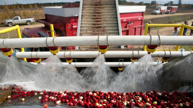 USDA purchase is expected to pump up to 68 million pounds of surplus cranberries into the diets of low-income children and families.