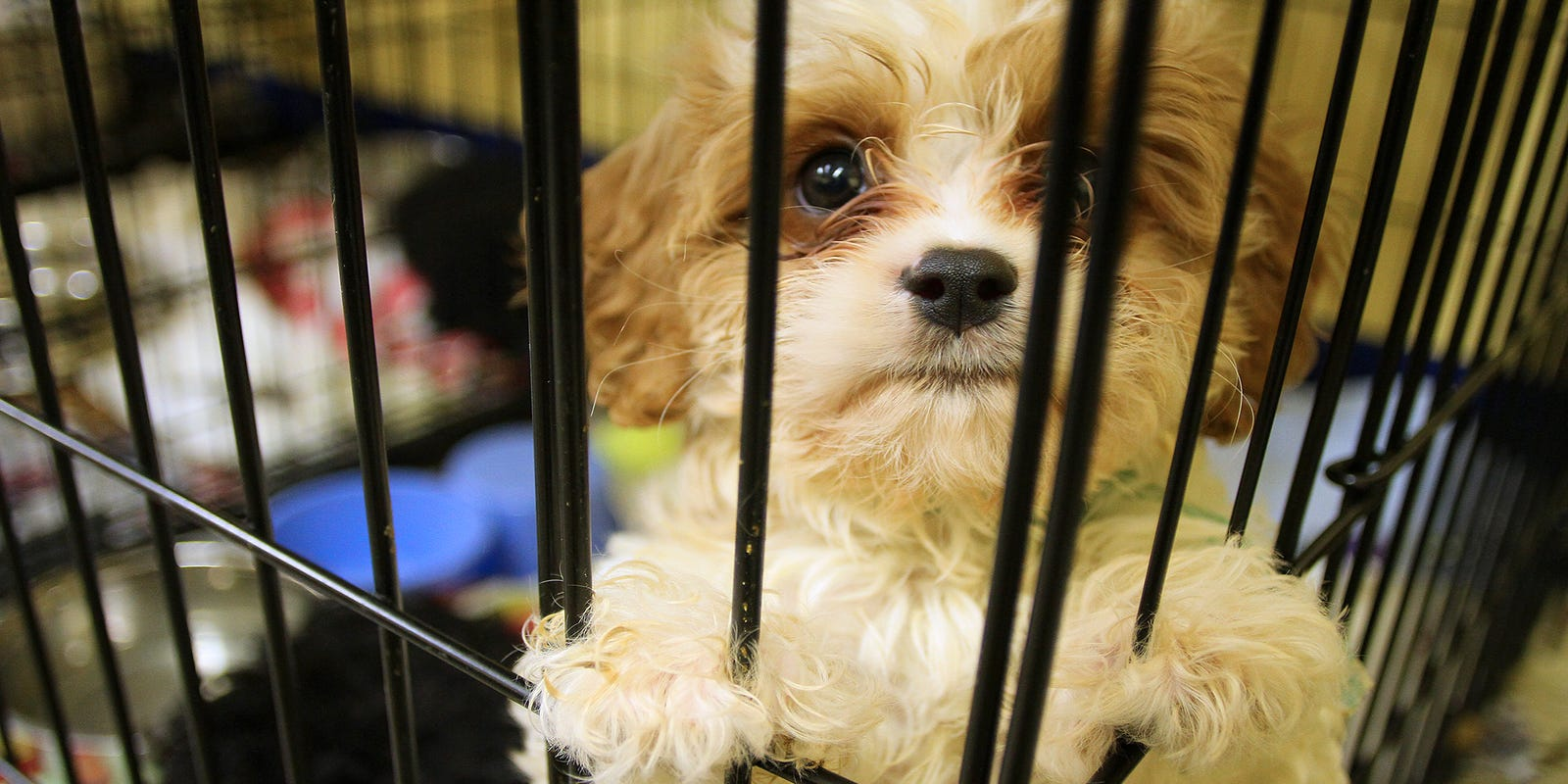 Does Wayne County have a puppy mill problem?