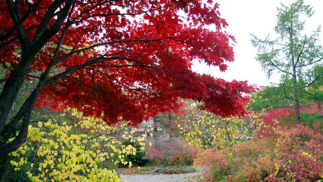 Vibrant fall hues were still visible throughout Highland Park on Wednesday.