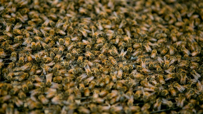 Bees crawl over a hive along Lincoln Road near Marshfield, Thursday, June 19, 2014.