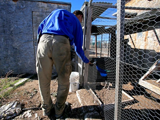 Matt Palulis greets one of his peacocks on Tuesday on his property in La Plata.
