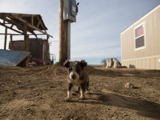 A puppy stands near the new home of Ina Yazzie Wednesday in Shiprock. Yazzie lost her home during the Aug. 5 Salt Creek Wash flash flood in Shiprock.