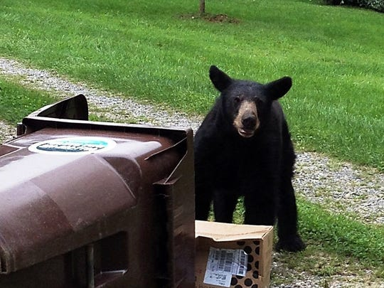 Bears in the mountains have learned that trash bins left by the road for pickup make a reliable food source. Waste Pro does offer bear-resistant cans for $300 each.