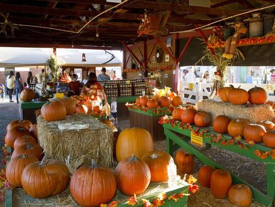 Through 11/6: Tolmachoff Farms Corn Maze & Pumpkin