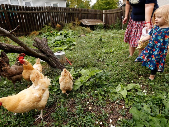 Iolana Keith, of Des Moines, Iowa, feeds chickens in