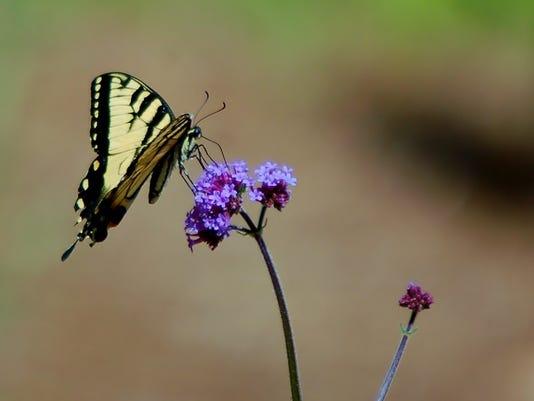 636059425017660595-LDN-DW-080716-butterfly.jpg