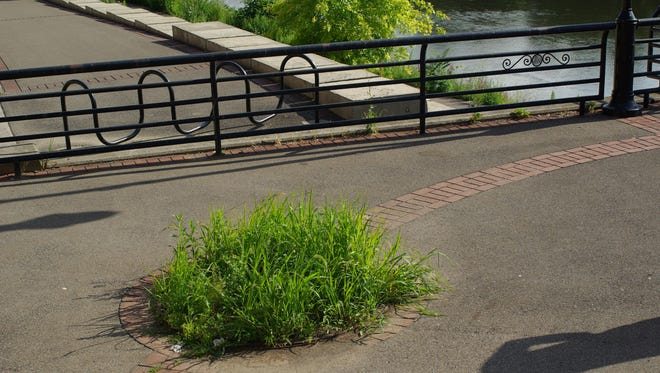 An unused tree well in downtown Binghamton.